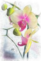 Flowing Orchids by SLMooreFineArt