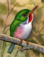 Cuban Tody by WillemSvdMerwe