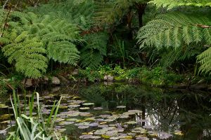 Ashcombes pond by Dryad-8