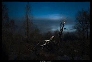 Broken Tree by Orooo