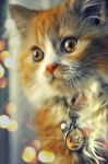 My New cat LOLO by New-Afnan