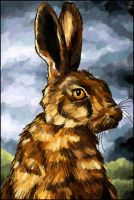 Brown hare by starmist