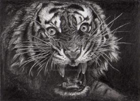 Tiger Roar by Gerassimos
