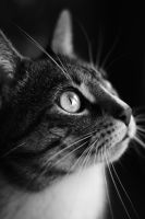 cat black and white by Borderkowa