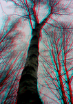 Veins (Anaglyph) by Hiscules
