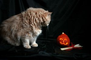 What is this pumpkin? by Ardesia