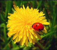 Chances by 0-c-t