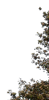 tree 30 png by gd08