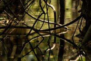 Jungle Reflections by donnasueb