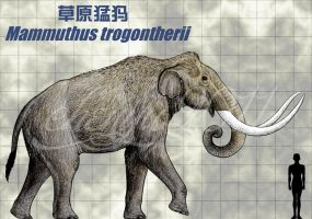 Mammuthus trogontherii by sinammonite