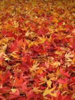Autumn leaves by iyonix