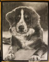 another dog commission... by KendallightStudios
