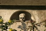 Skull by almudena-stock