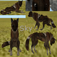 Sky  Feral-Heart Adoption -Open- by AdoptablesOfAllKinds