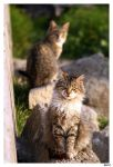 serious cat by curan