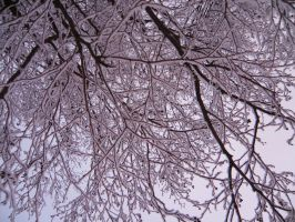Branches by elvytys