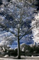 Infrared : Tree by br3w0k