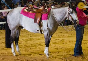 STOCK - 2014 Total Equine Expo-25 by fillyrox