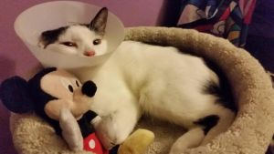 My Poor Baby Belle with Mickey Mouse by DisneyandZimFanatic