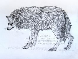 Wolf sketch by ZulayaWolf