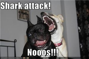 Dog...Attack... by mantis484848