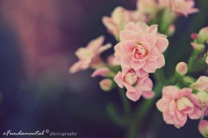 island of Flower. Pink. II by eFundamental