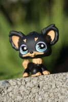 LPS dog 2 by Eli102