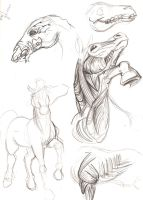 Horse Muscle and Skull Study by Goldbryn