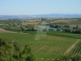 Napa Valley by donna-j
