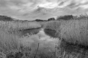 Reeds 1441 by filmwaster