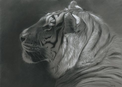 Tigre portrait : charcoal and pastel on Pastelmat by wimke