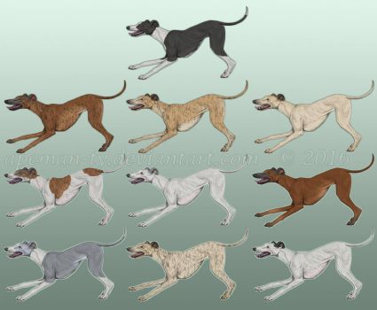 Greyhounds by Apeman-ty