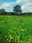 Flower field by adiastock