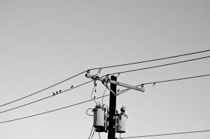 Birds on a wire by daintyish