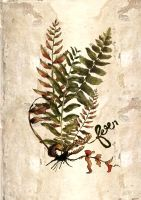 Fern1 by paperdull