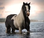 The Gypsy Vanner by A-Motive