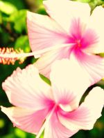 Fluorescent Hibiscus by StephaniTheArtist