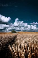 Fields by apfe