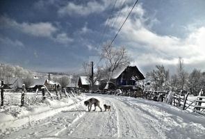 the first winter for the little puppy by lily-macovei