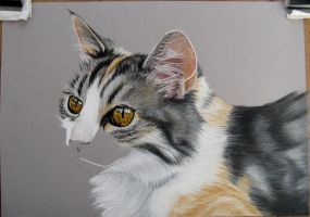 Tita 2. Cat in pastel by mo62
