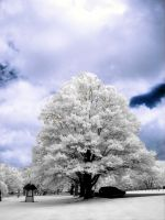 Another Infrared Tree by ilimel