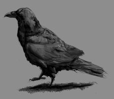 Crow by L235