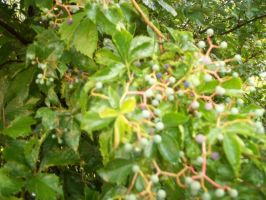 Berry Bush Vine Thing by TheReapersApprentice