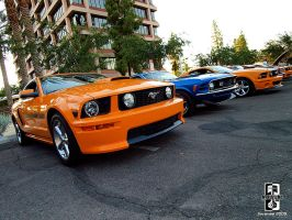 Mustangs Are Like Rabbits by Swanee3