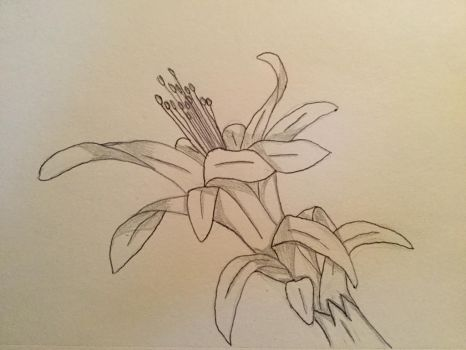 Christmas cactus  by Concho10