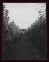 Black Apples by PhotoPurist