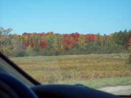 Michigan Fall Color Ride 2010 by DraftHorseTrainer