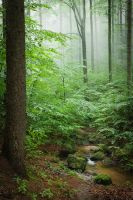 whispers of the forest by JoannaRzeznikowska