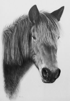 New Forest Pony 2 by CBailey52
