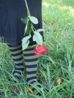 Forcky with socks.. and rose by FrockTarts